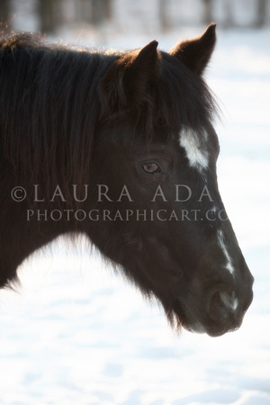 Winter Pony by Michigan Professional Horse Photographer Laura Adams