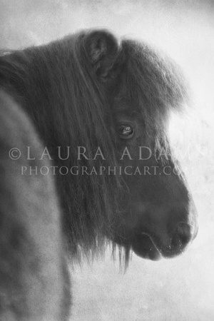 Gulliver by Premier Equine Photographer, Laura Adams